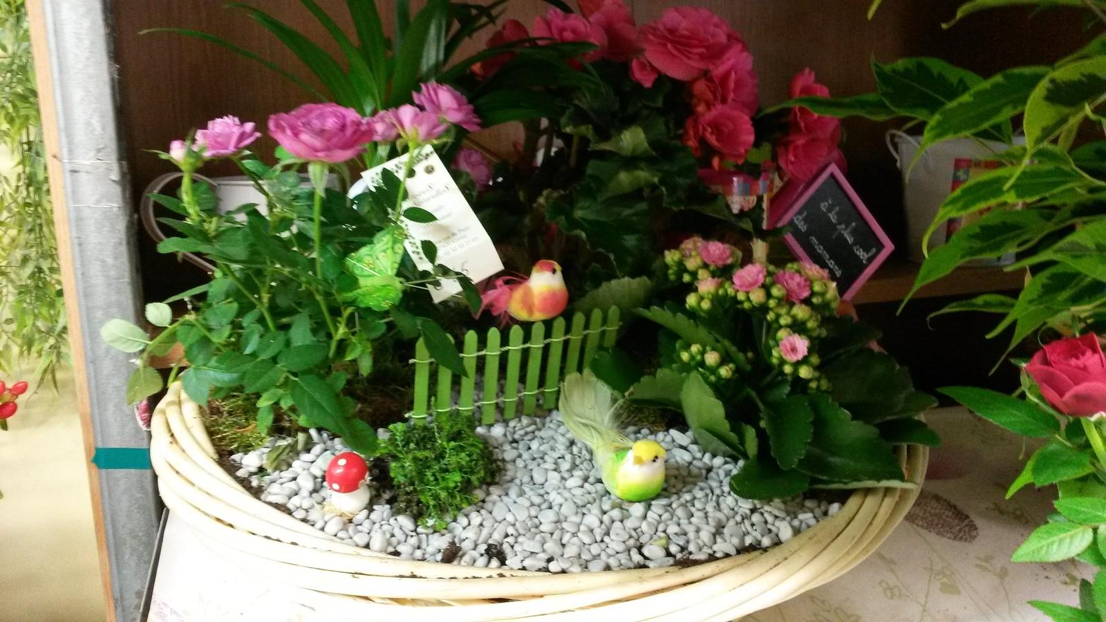 Composition plantes gasny plante d 39 int rieur et d for Fushia plante interieur ou exterieur