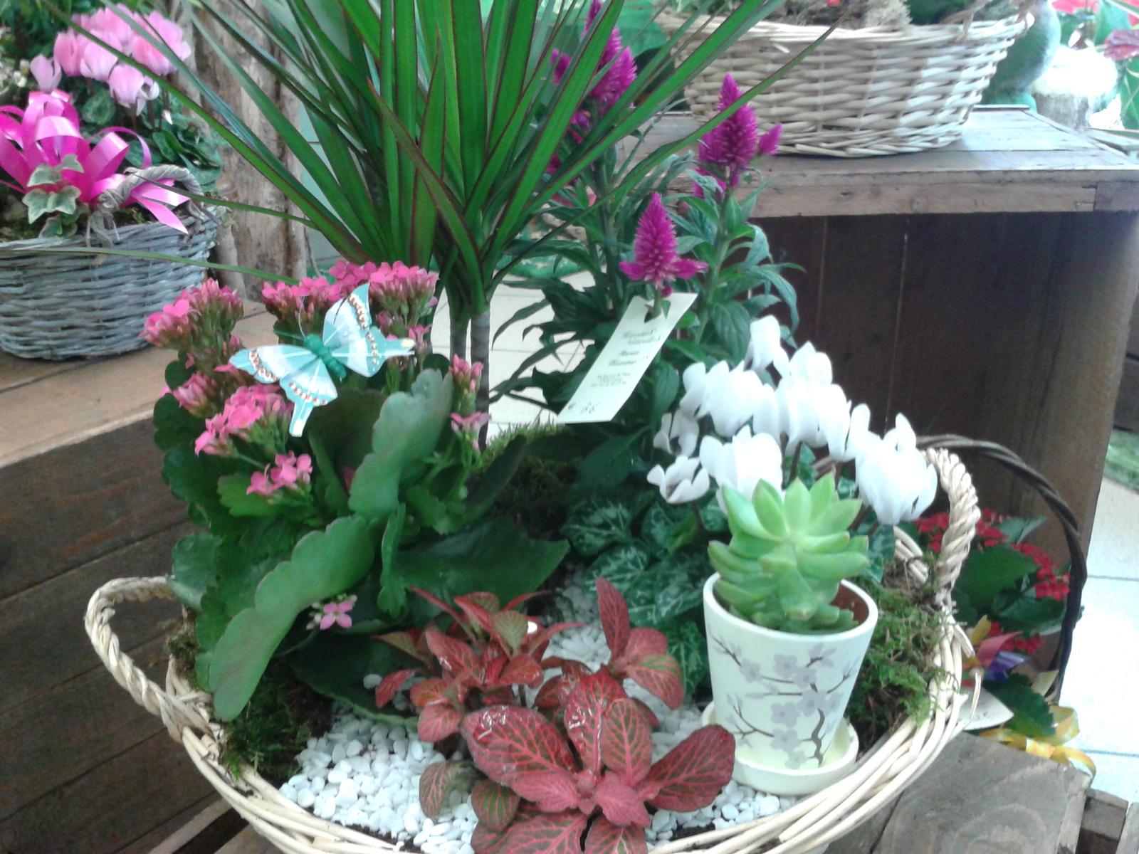 Composition plantes gasny plante d 39 int rieur et d for Plantes d exterieur